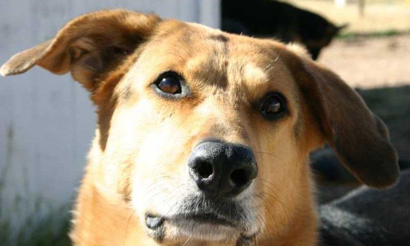 O projeto de lei que favorece os pets foi aprovado na noite de terça-feira (Foto: Divulgação)