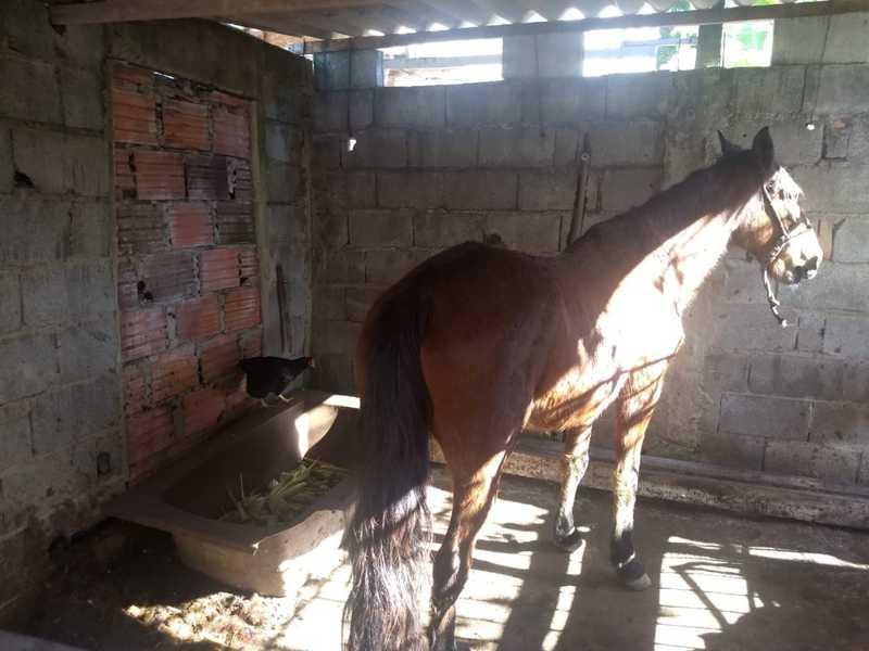 Segundo a polícia, todos os 61 animais estavam em condições de maus-tratos — Foto: Divulgação