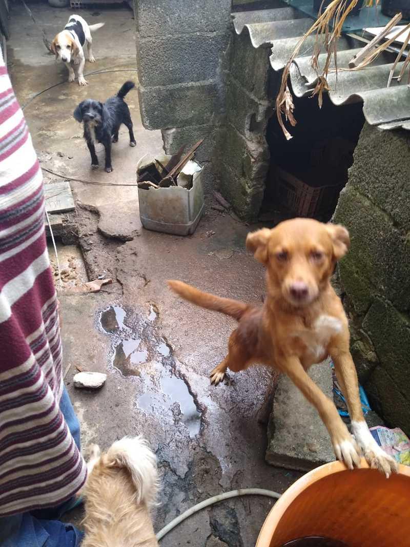 Mulher é multada em mais de R$ 200 mil por maus-tratos a 61 animais em Guarujá, SP — Foto: Divulgação