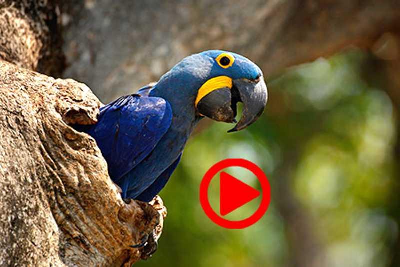 Osasco (SP) vai ganhar Centro de Triagem de Animais Silvestres
