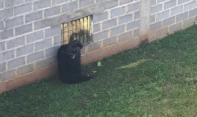 Chimpanzé Black tem 'vizinhas' do recinto — Foto: Arquivo pessoal