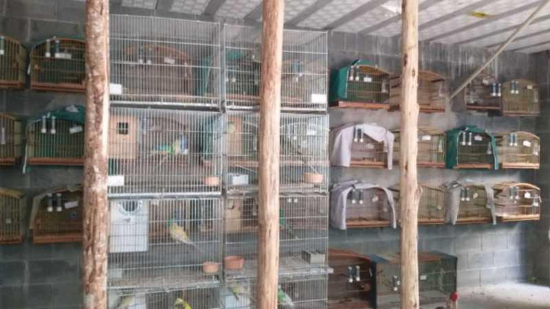 Operação 'Vôo Livre' resgata mais de 100 aves silvestres no Vale do Paraíba, SP