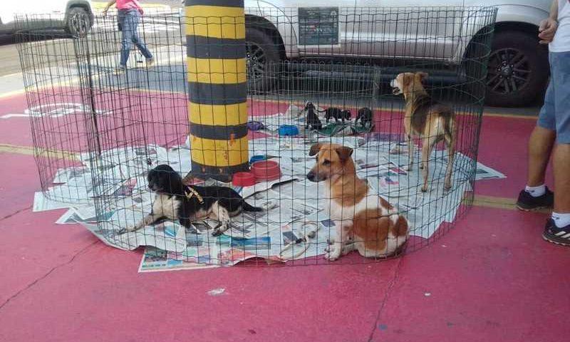 Feira de adoção de animais foi realizada nesta quinta-feira (20) na praça da Emdurb, em Marília — Foto: Prefeitura de Marília/Divulgação