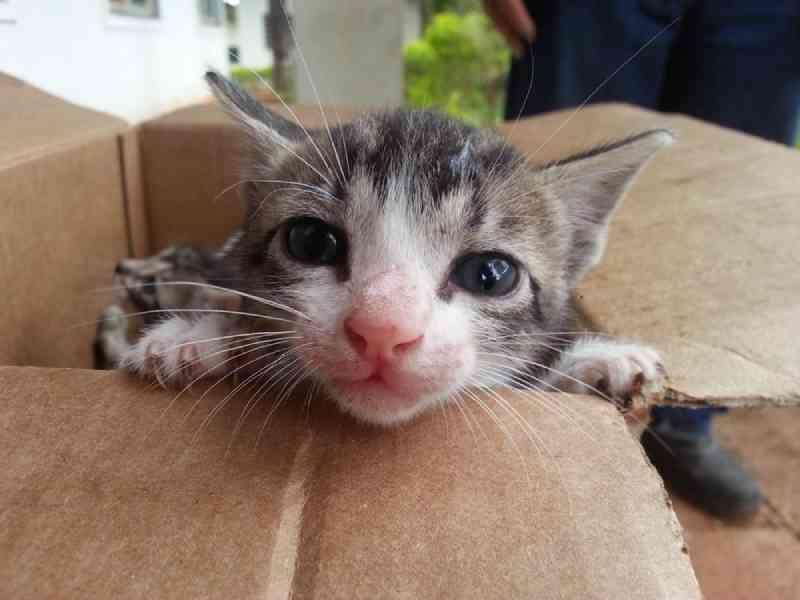 Mutirão será realizado pelo CCZ de Gurupi (TO) para castrar gatos de rua capturados na cidade