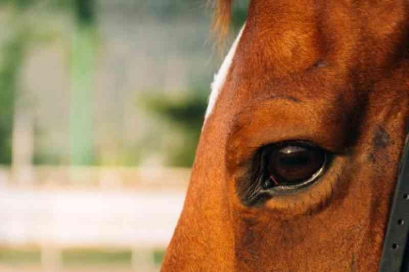 MPE recomenda que órgãos públicos tomem providências para evitar maus-tratos de animais durante a Expoara 2019, no TO