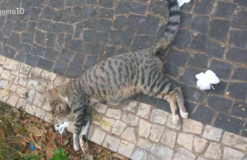 Mais de 50 gatos são encontrados mortos em um ano e moradores suspeitam de envenenamento