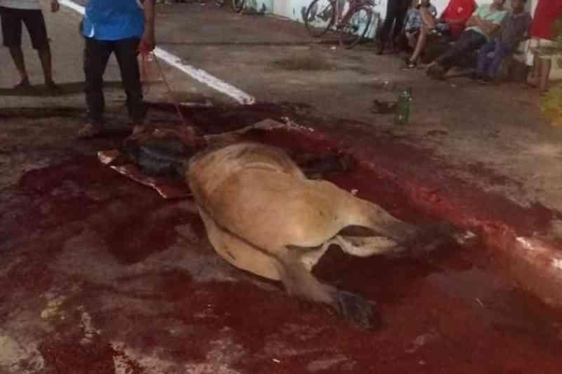 Cadáver de animal morto em cavalgada desaparece no Tocantins; Adapec investiga
