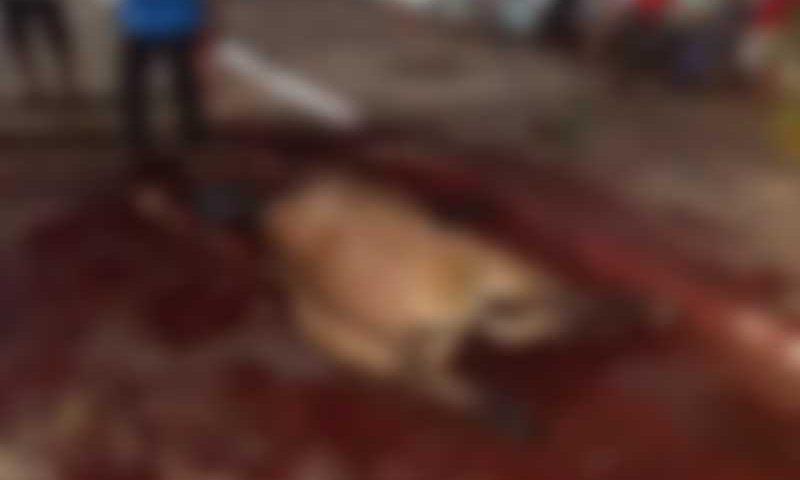 Animais morrem após participar de 'Cavalgada Ecológica' neste fim de semana no Tocantins
