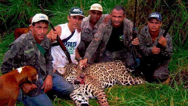 DENÚNCIA: Justiça investiga grupo de caçadores por abater mais de mil onças