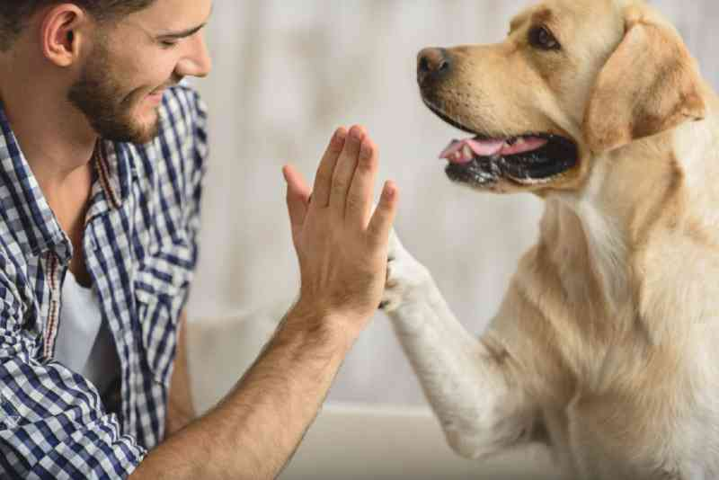 OAB do Acre cria Comissão de Defesa e Proteção dos Animais