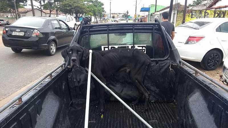 Bombeiros resgatam cão abandonado pelos tutores há meses em Penedo, AL