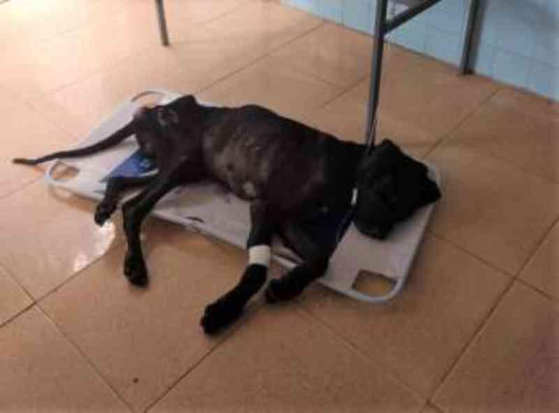 OAB formaliza denúncia contra dono de cachorro abandonado em Penedo, AL