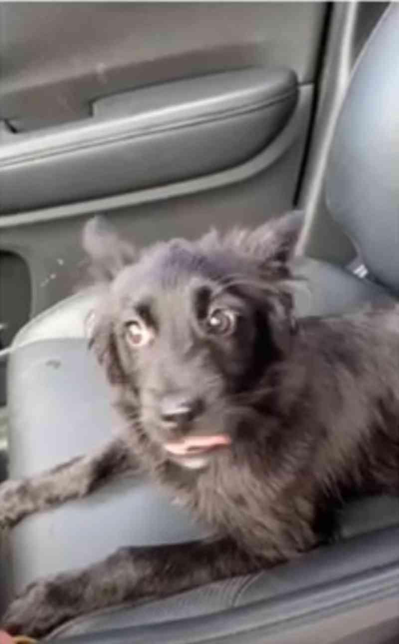 Cães espancados são resgatados por Comissão da OAB/AL