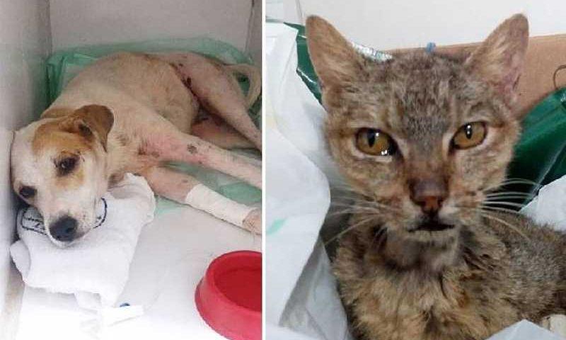 Pata Voluntária: ONG chegou a 1,5 milhão de seguidores no Instagram, onde exibia animais precisando de ajuda (Reprodução/Instagram)