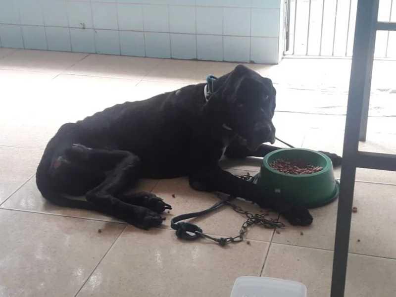 Guerreiro foi resgatado com estado de saúde crítico em casa abandonada em Penedo. Foto: cortesia