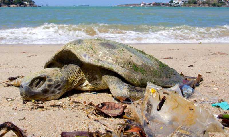 Tartaruga-verde morta em praia suja; calcula-se que prejuízo para o ecossistema marinho seja de US$ 8 bilhões por ano — Foto: Robson Santos/Arquivo Pessoal