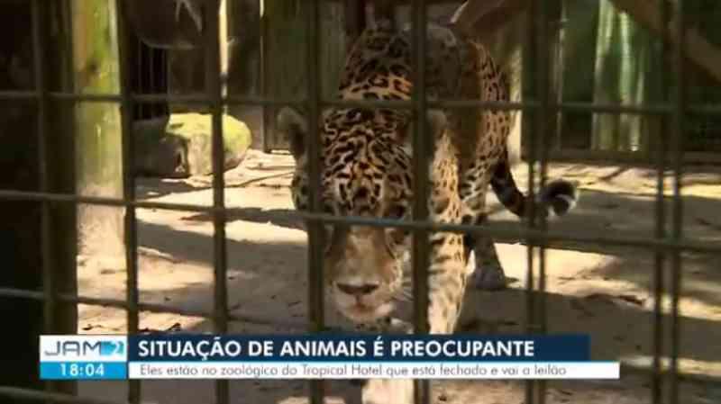 Animais de zoológico em hotel desativado sobrevivem com ajuda de voluntários, em Manaus, AM