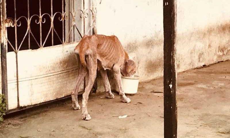 Lei prevê multa de até R$ 4 mil para autores de maus-tratos a animais em Manaus