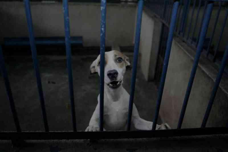 PL aprovada proíbe mutilação e procedimentos em animais para fins estéticos