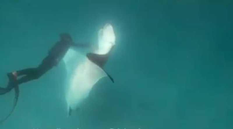 Em vídeo emocionante, arraia com anzol preso no olho pede ajuda a mergulhadores