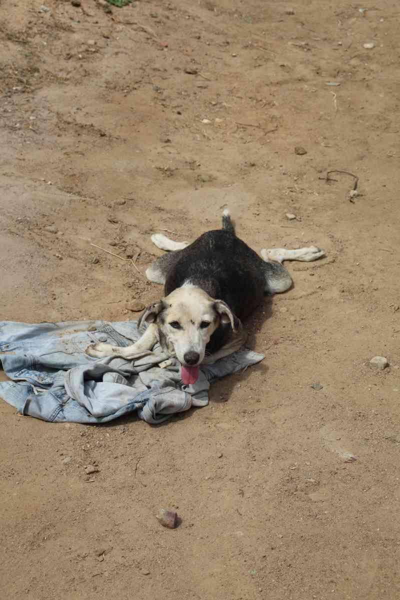 Homem é preso maus-tratos de animais em Piritiba, BA; cadela ficou paralítica após paulada