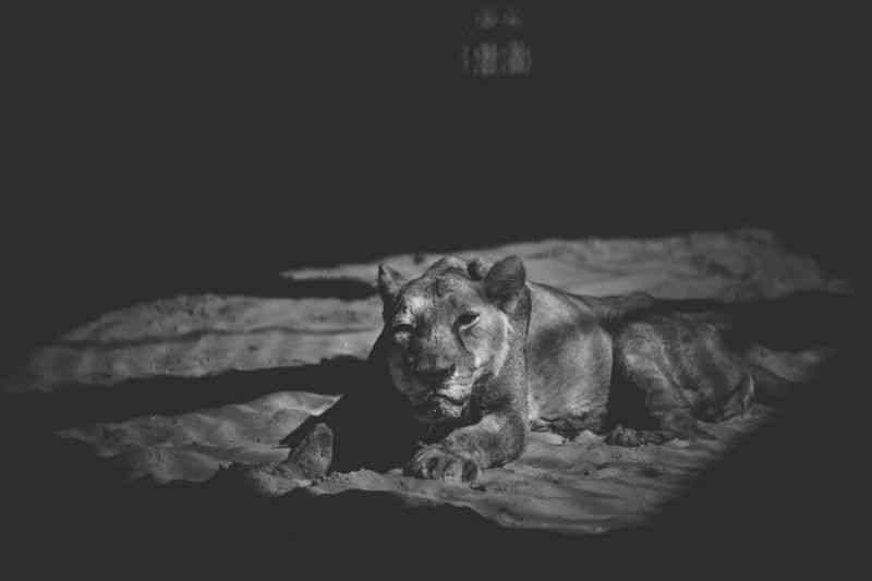 Fotógrafo alerta para o sofrimento dos animais no jardim zoológico do Bangladexe