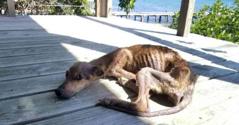 Fotógrafo encontra um cão vadio magro na ilha abandonada