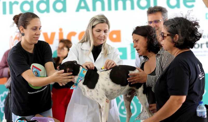 Registro é utilizado para acompanhar situação de animais após a adoção e pode ser solicitado gratuitamente em Fortaleza — Foto: Divulgação/Prefeitura de Fortaleza