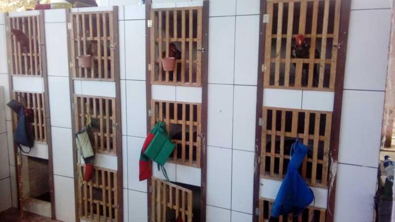 39 galos foram encontrados em uma residência na Região Metropolitana de Fortaleza. — Foto: Divulgação/PM