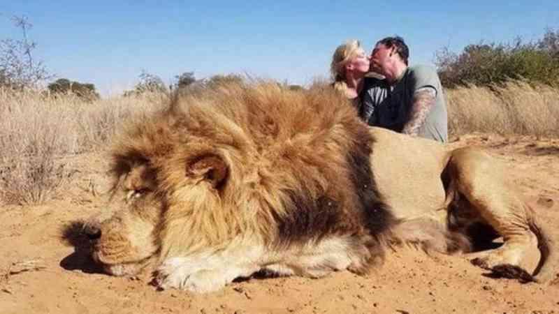 Casal de caçadores se beijando diante de leão abatido provoca revolta na web