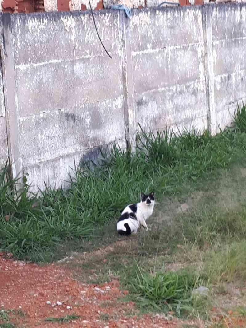 Gatinha abandonada por família morre na rua em Taguatinga, DF