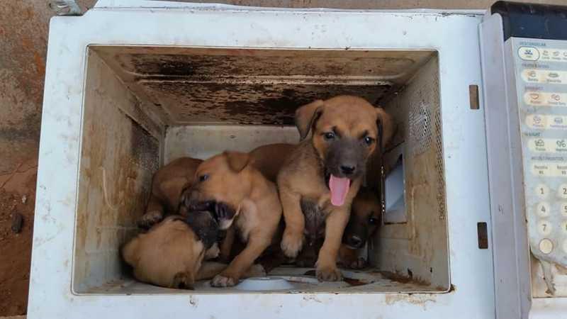 Filhotes de cachorro foram abandonados dentro de um micro-ondas no Distrito Federal — Foto: Walace Gomes/Arquivo pessoal