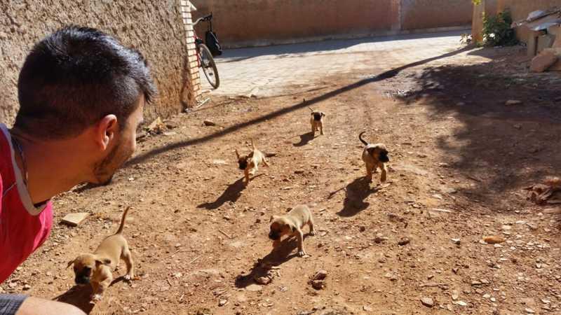 Cachorros abandonados brincam com morador em rua do DF — Foto: Walace Gomes/Arquivo pessoal