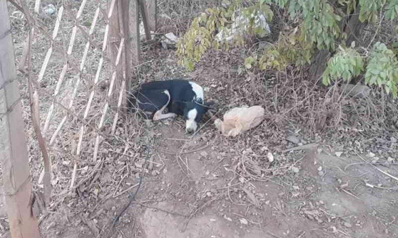 Enteado denuncia padrasto à polícia por estupro de cadela no DF