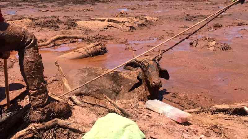 Senador apresenta proposta que normatiza a proteção de animais em desastres