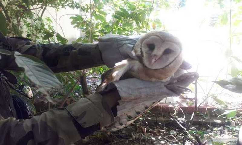 A coruja foi encaminhada para o Centro de Triagem de Animais Silvestres (Cetas) do Ibama, em Taguatinga, para receber os devidos cuidados (foto: BPMA/Divulgação)