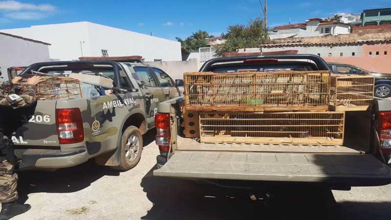 Batalhão Ambiental resgata 47 canários no DF — Foto: Batalhão de Polícia Militar Ambiental do DF/Divulgação