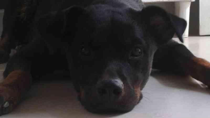 Moradores de Linhares, ES, denunciam envenenamento de cães e gatos