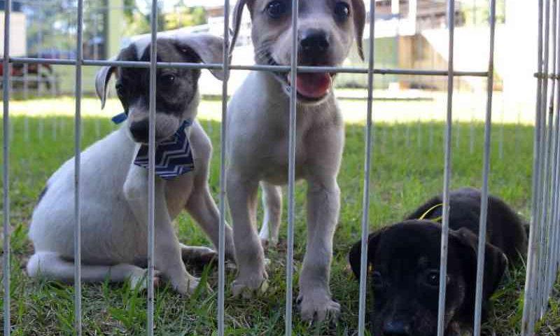 Por dia, três denúncias de maus-tratos a animais são registradas na Grande Vitória, ES