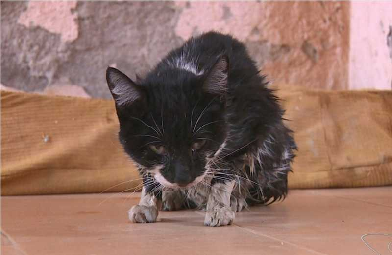 Gato passa mal por supostamente ser envenenado — Foto: Reprodução/TV Gazeta