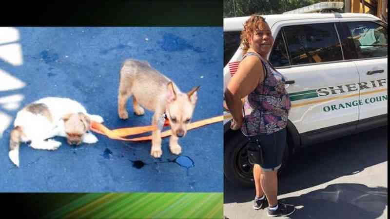Mulher é presa ao deixar três cães dentro do carro; dois morreram