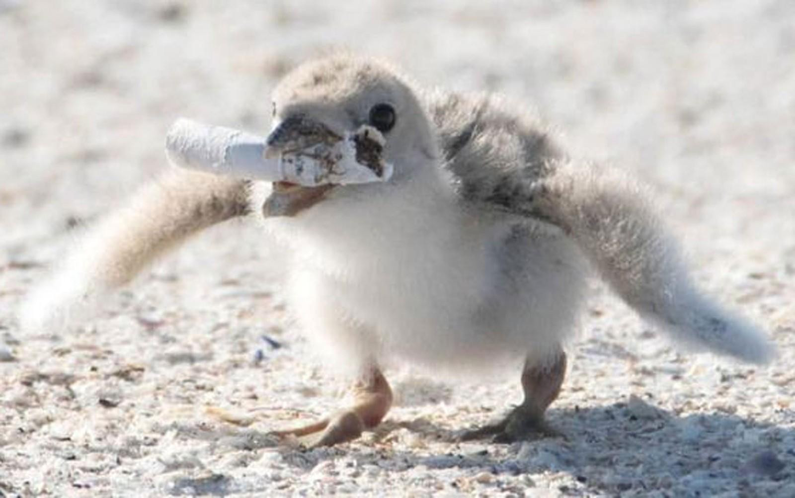 Bitucas de cigarros são os itens de lixo mais encontrados em praias do mundo, segundo entidades de conservação — Foto: Karen Mason