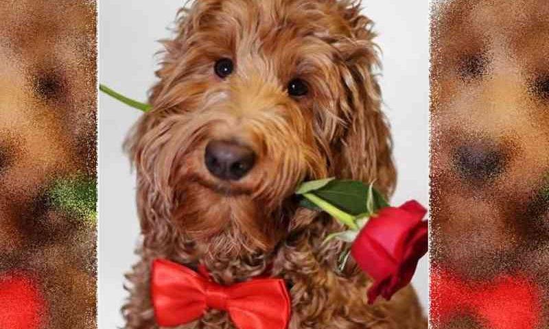 Menino faz gravatas-borboleta para cães e gatos que estão em abrigos