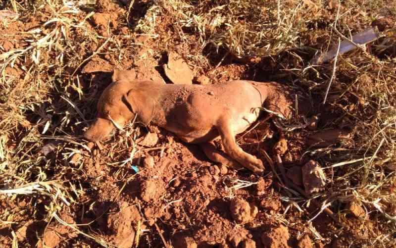 Cachorro é encontrado 'enterrado vivo' dentro de buraco em mata de Catalão, GO