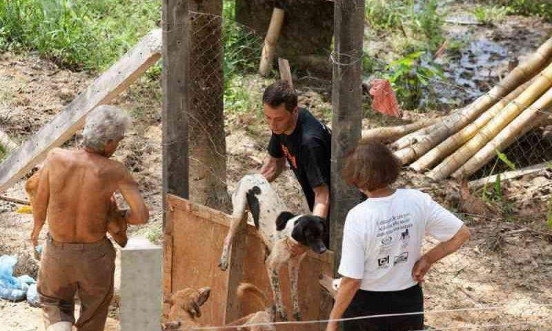 Associação que resgata animais abandonados em Além Paraíba (MG) pede ajuda para manter as portas abertas