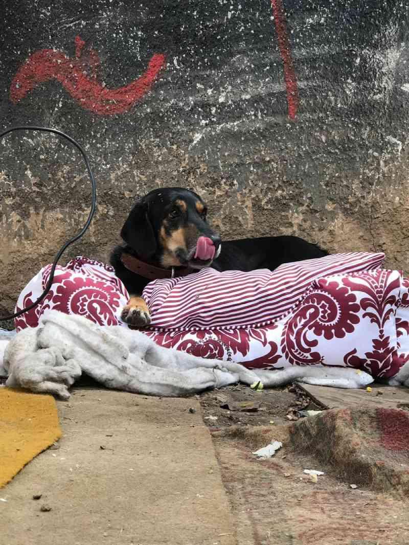 Quase 90% dos bichos resgatados em BH pelo Centro de Zoonoses voltam às ruas, diz prefeitura