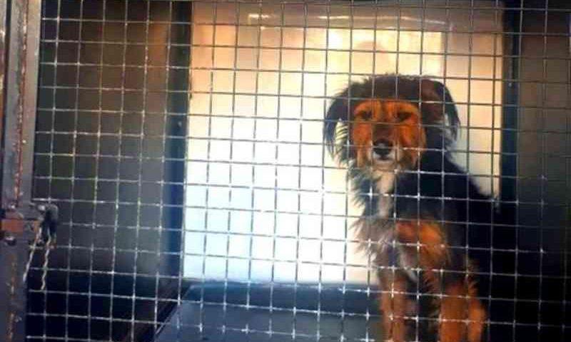 Cães vítimas de maus-tratos são resgatados pela Polícia Civil em Contagem, MG