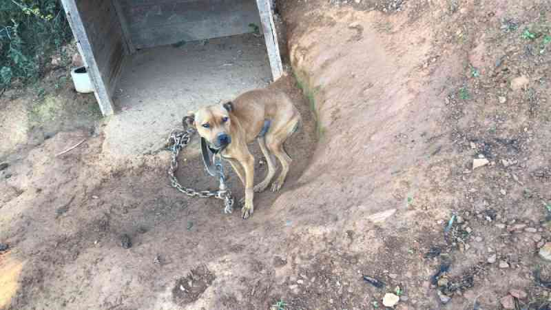 Cães são encontrados em situação de maus-tratos em Sabará, MG