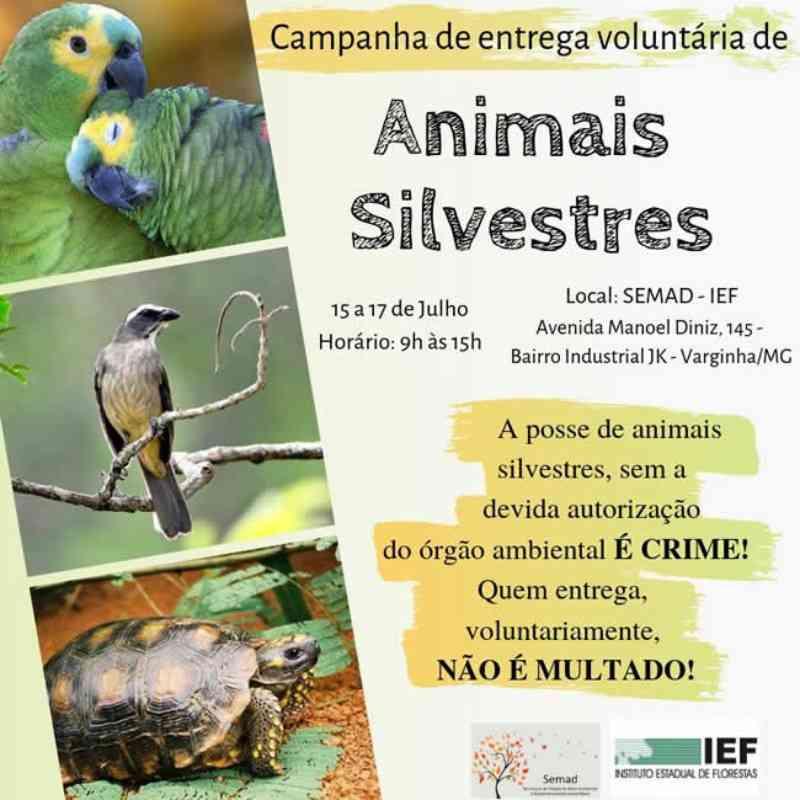 Ação promove entrega voluntária de animais silvestres em Varginha, MG