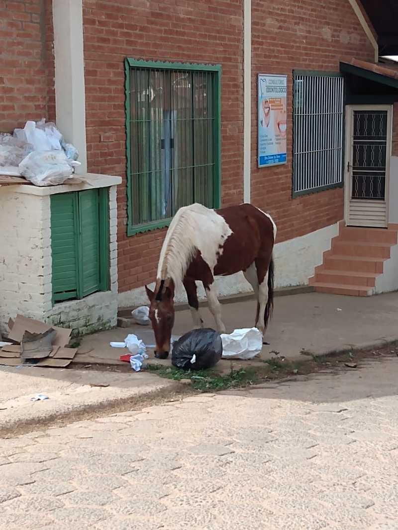 Abandono e maus-tratos de cavalos são retrato de triste realidade na bela Monte Verde, MG